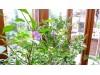 Zimní zahrady pro pěstování rostlin